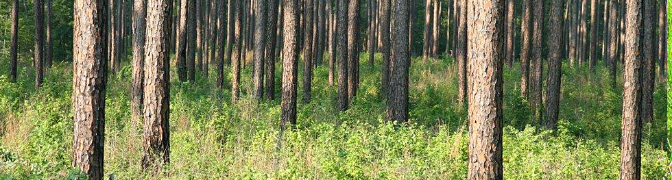 Texas Forestry